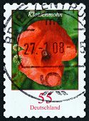 Postage Stamp Germany 2005 Red Poppy, Flowering Plant