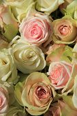 White And Pink Roses In Wedding Arrangement