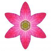 Purple Kaleidoscopic Lily Flower Mandala  Isolated On White