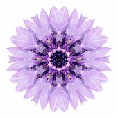 Purple Cornflower Mandala Flower Kaleidoscope Isolated On White