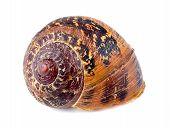 Macro Of Beautiful Abandoned Snail Shell