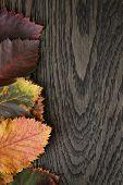 Autumn Hawthorn Leaves On Old Oak Table