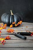 Black colored pumpkin with berries and scissors on table