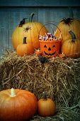 Bucket filled with Halloween candy and pumpkins on hay