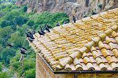 Tuscany city birds