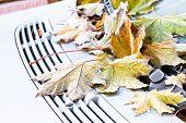 Frozen Fallen Yellow Maple Leaves On Car