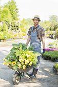 Full-length portrait of happy gardener pushing wheelbarrow with plants at garden