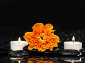 White candle with ranunculus with reflection