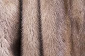 Texture of fur of a mink of color pastel