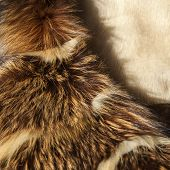 Texture of natural fur: fur of a fox