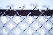 Fence With Frost 3
