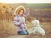 happy girl with her dog breed White Terrier walking in a field in autumn
