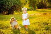 picture of sheltie  - Little girl and dog breed sheltie playing outdoors on a sunny day - JPG