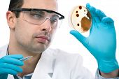 picture of microorganisms  - Scientist observing petri dish at the laboratory - JPG