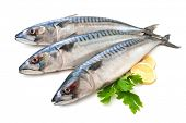 Mackerel Fish (Scomber scrombrus) over white background