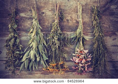 Vintage Stylized Photo Of Bunches Of Healing Herbs On Wooden Wall, Herbal Medicine.