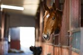 pic of stable horse  - Head of horse looking over the stable doors - JPG