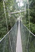 picture of canopy  - Canopy walkway - JPG
