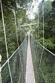 stock photo of canopy  - Canopy walkway - JPG