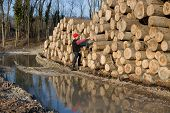 picture of lumber  - Young lumber engineer standing beside cut trunks and counting - JPG