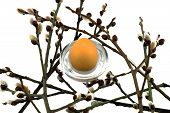 stock photo of willow  - Easter willow and egg on a white background - JPG