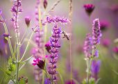 foto of meadows  - Beautiful meadow with wild flowers and bee  - JPG