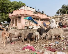 stock photo of animal cruelty  - disposal dump in the middle of the asian street with stray animals eating - JPG