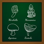 picture of kindness  - Vector illustration of different kinds of mushrooms on background of green blackboard - JPG