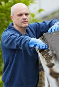 stock photo of gutter  - Man Clearing Leaves From Guttering Of House - JPG