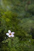 stock photo of lichenes  - one Lichen flower near the green water - JPG