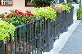 picture of vicenza  - Flowered iron railing of Saint Paui bridge in Vicenza - JPG