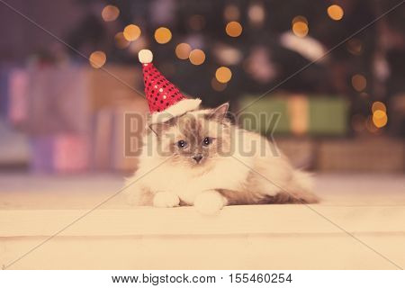 poster of Cat. Christmas party, winter holidays cat with gift box. New year cat. christmas tree in interior ba