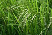 Sunny Green Grass Clouse-Up