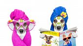 Dogs With A Beauty Mask Wellness Spa poster