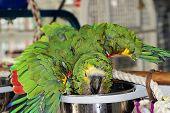 Birdie Hygene
