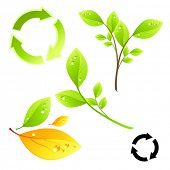 Green living vector elements.