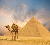 Fiery Sunset Egypt Pyramids Camel Foreground H poster