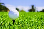 golf ball on the bright green grass - as a symbol of success
