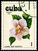 Vintage  Postage Stamp. Tues Flowers Pacifist. 5.