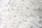 White Birch Tree Bark Texture Horizontal