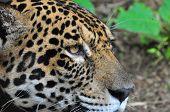 Thinking Jag