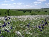 Meadow Steppe