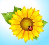 vector sunflower with ladybird on sky