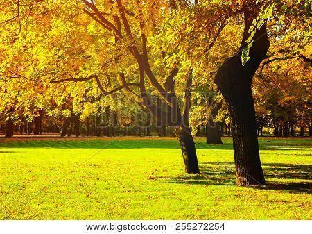 poster of Autumn trees with yellowed autumn foliage in sunny autumn September park lit by sunshine. Colorful autumn landscape in vivid tones. Beautiful autumn trees in the sunny autumn weather