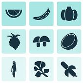 Vegetable Icons Set With Gourd, Raspberry, Acorn And Other Coco Elements. Isolated  Illustration Veg poster