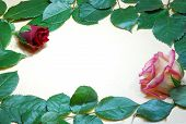 Double Rose Love Message