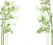 vector illustration of a bamboo forest