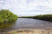 Cayman Islands Brackish Water