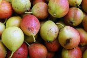 Ripe Fruits Pear Harvest.ripe Fruits Of The Pear Background poster