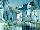 picture of cetacea  - group of the dolphins in modern shop interior  - JPG